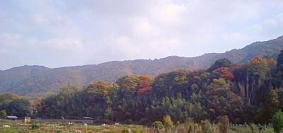 紅葉が始まっている山(大阪府池田市)