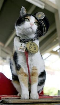 スーパー猫駅長、たまの経済効果11億円