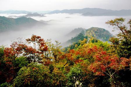 紅葉の山の向こうに広がる雲海
