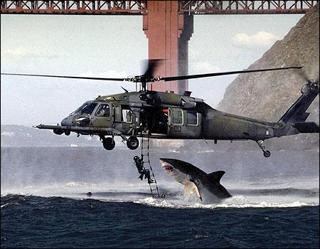 ヘリとサメ