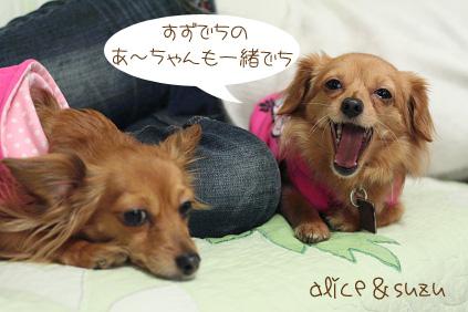 2009 03 08 四十路パーティー blog03のコピー