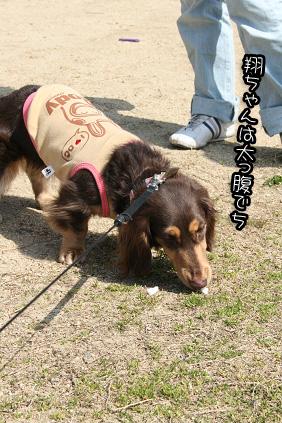2009 03 21 久宝寺緑地3 blog06のコピー