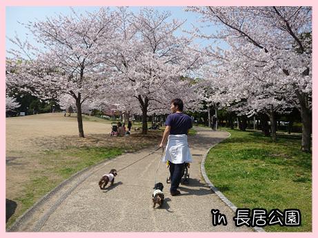 2009 04 06 2009お花見 blog01のコピー