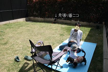 2009 04 18 ひなたぼっこ2 blog02のコピー