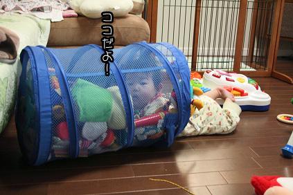 2009 04 23 モモとニコ blog01のコピー