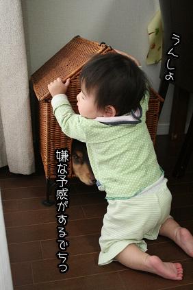 2009 04 21 モモとニコ blog01のコピー