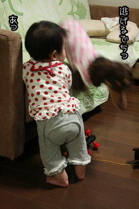 2009 04 21 モモとニコ blog04のコピー