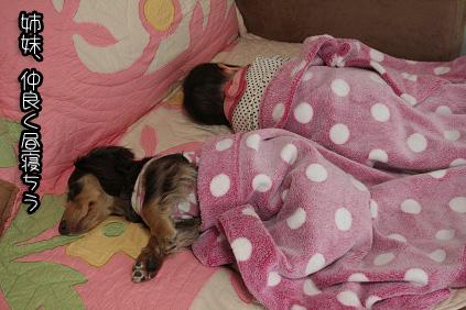 2009 04 29 モモの昼寝2 blog02のコピー
