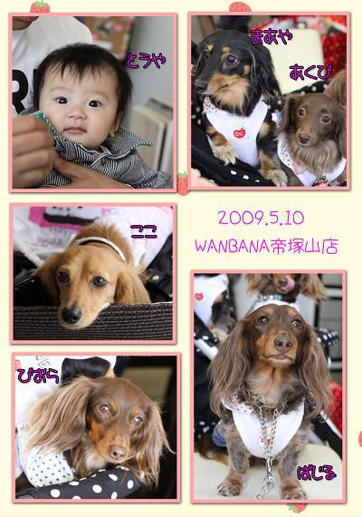 20090510ワンバナ blog02