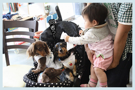 blog06 IMG_5068のコピー