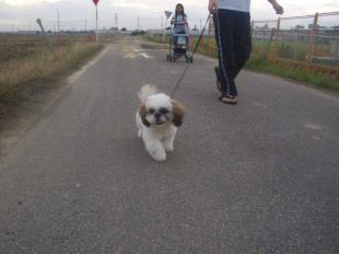 take a walk6