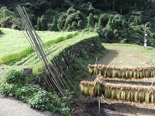蕎麦畑と赤米の掛け干し風景