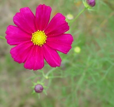 9月の庭4