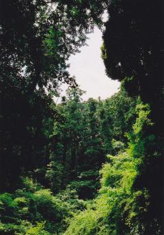 20090615 (3)