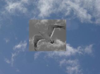 2008-08-04-11.jpg