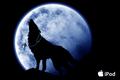 月夜の狼* [構図変更]