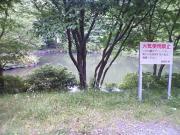 20090602b15.jpg
