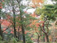 神宮徴古館の自然1