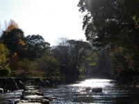 飛び石からの五十鈴川