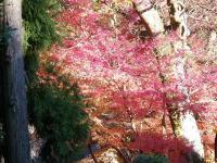 高麗広の紅葉