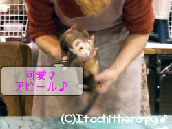 m-ch-b2.jpg