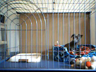 Video+call+snapshot+10_convert_20090609194824.png
