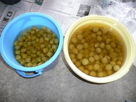 漬けて20日の梅と梅酢
