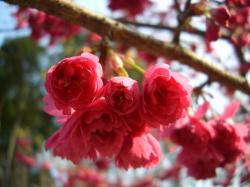 花が咲いてます