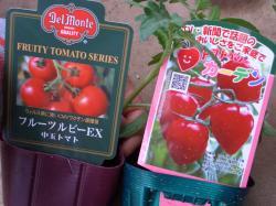 中玉トマトだよ~