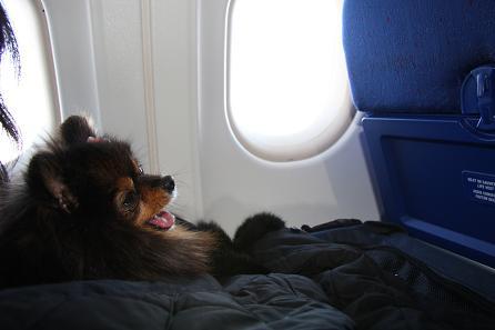 パリへの機内2