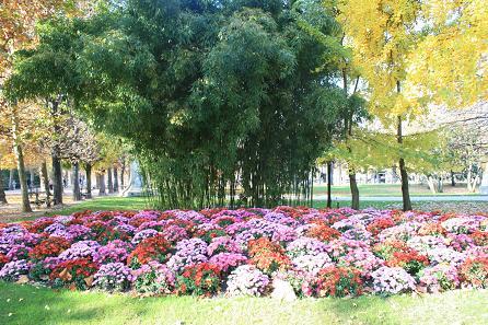 リュクサンブール公園の花1