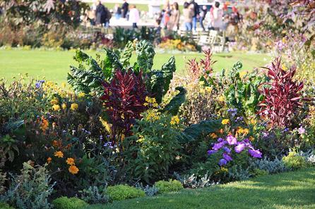 リュクサンブール公園の花2