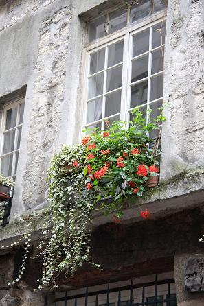 パリの窓辺の花5
