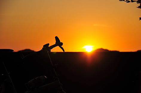 丁度、夕日が沈む時間