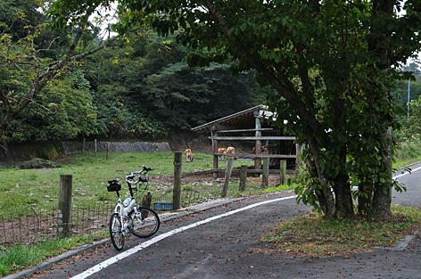 道沿いの牛発見