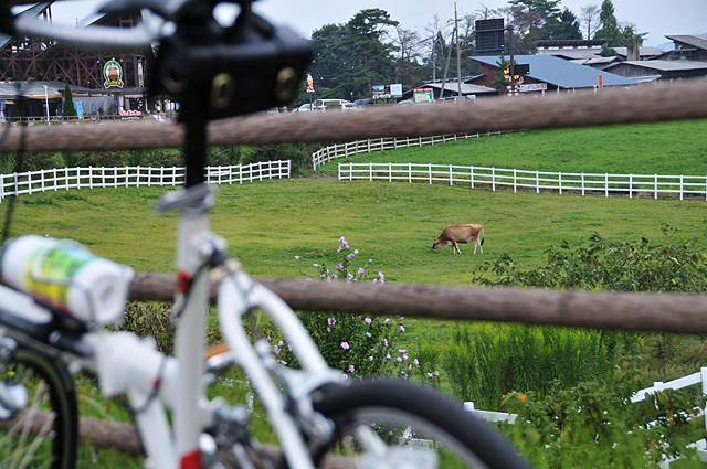 ふれあい広場の牛