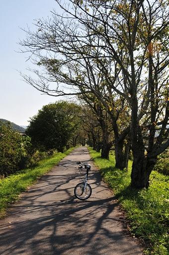 桜の季節はこの道はすごい