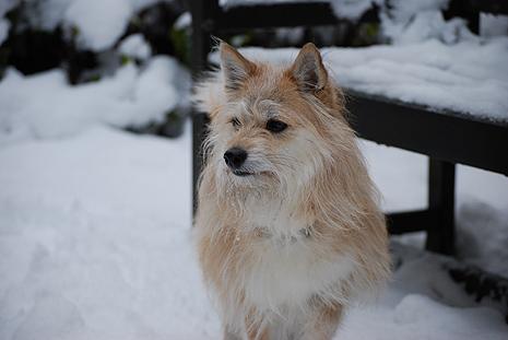 雪つもる庭にて