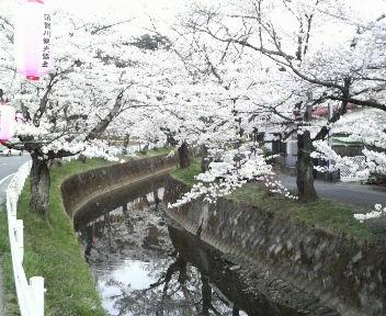 花見(川)