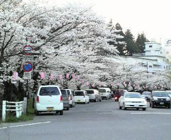 花見(公園入口)