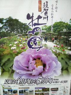 牡丹園ポスター