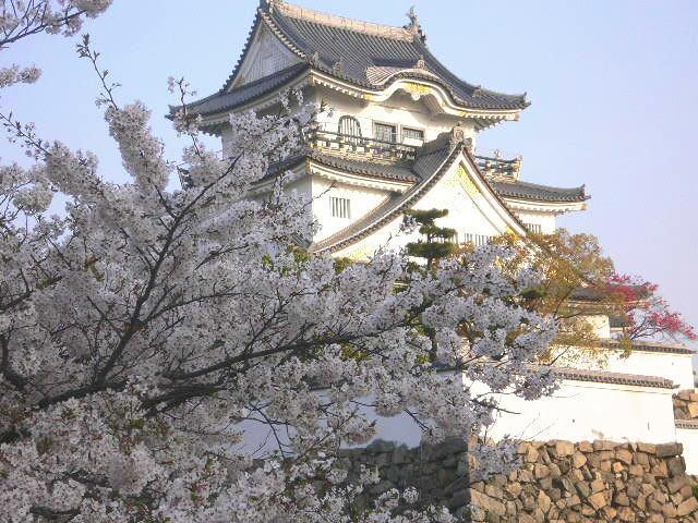054-10sakura4.jpg