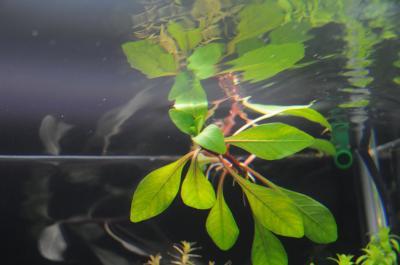 水上葉のころ