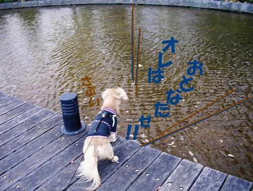 池の畔で物思う♂