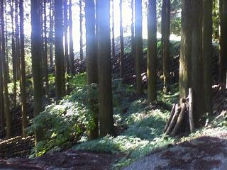 木漏れ日横