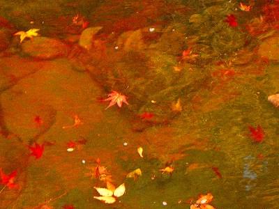 紅葉。12