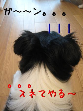 2Y4QBDwB.jpg