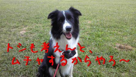 sakura_20090925224237.jpg