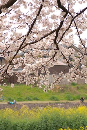 桜46.jpg
