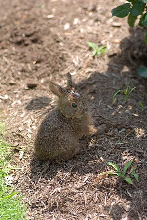 ウサギ65